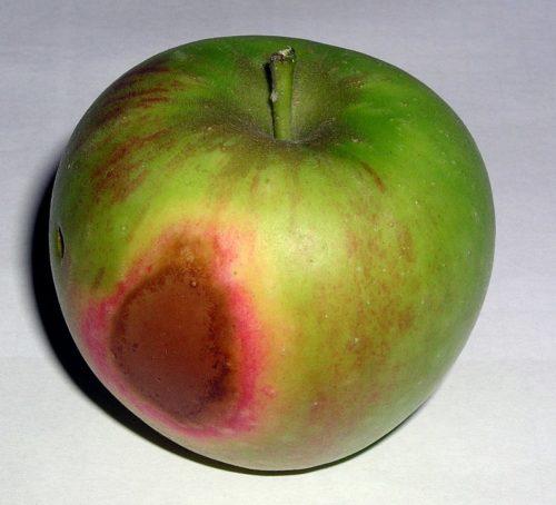 herkennen van zonnebrand op appel
